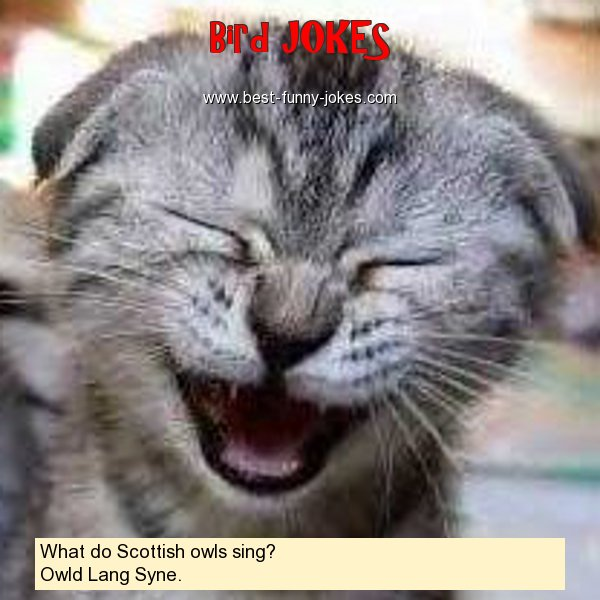 What do Scottish owls sing?