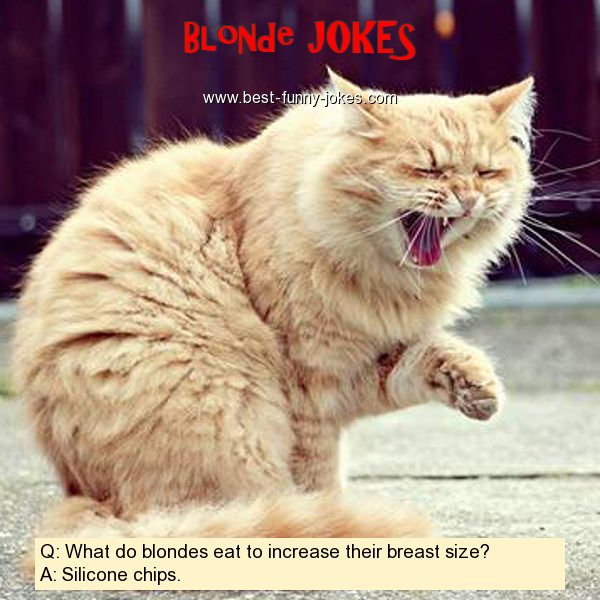 Q: What do blondes eat to incr