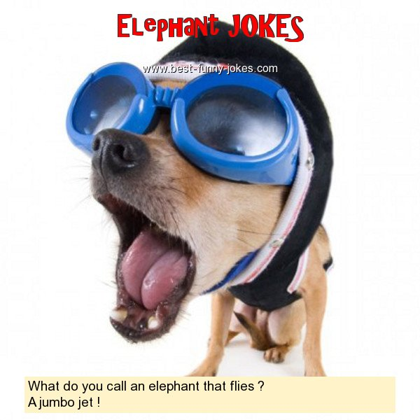What do you call an elephant