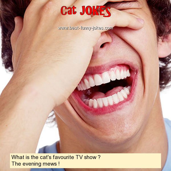 What is the cat's favourite TV