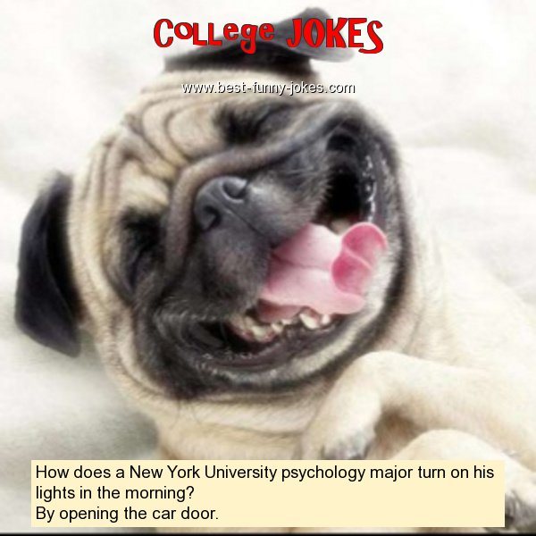 How does a New York University