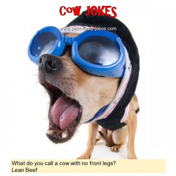 What do you call a cow with no