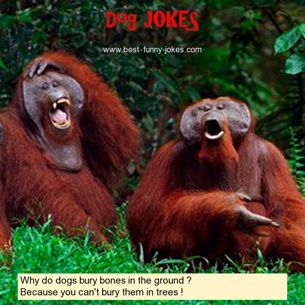 Why do dogs bury bones in th