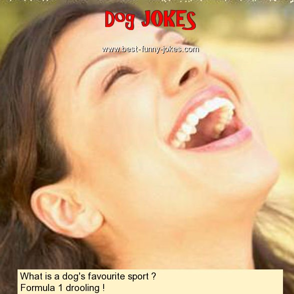 What is a dog's favourite spor