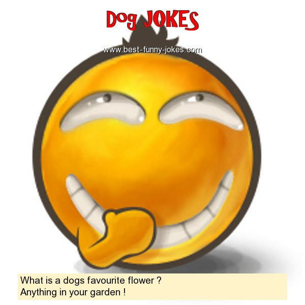 What is a dogs favourite flowe
