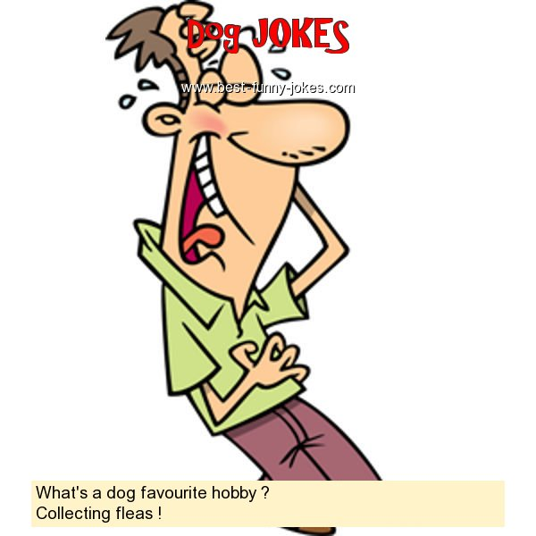 What's a dog favourite hobby ?