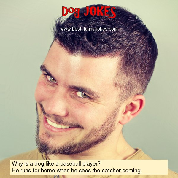 Why is a dog like a baseball