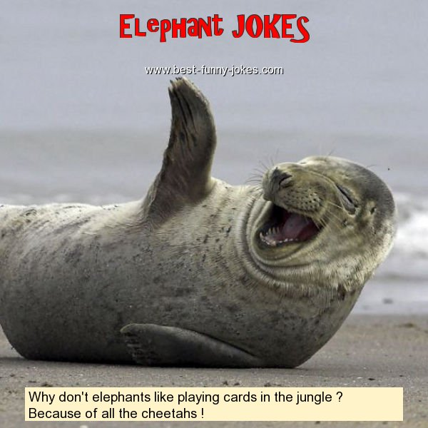 Why don't elephants like playi