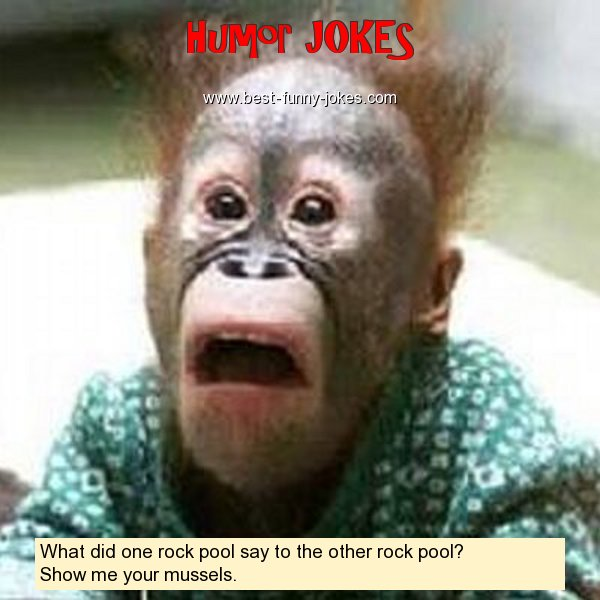 What did one rock pool say to