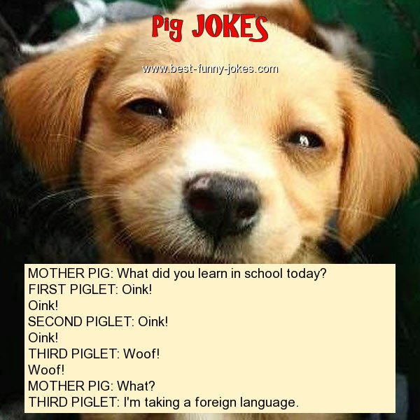 MOTHER PIG: What did you learn