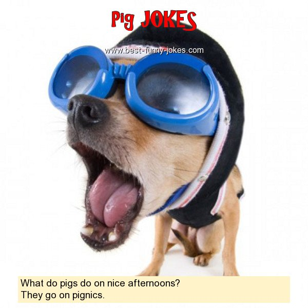 What do pigs do on nice aftern