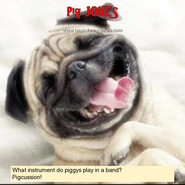 What instrument do piggys play