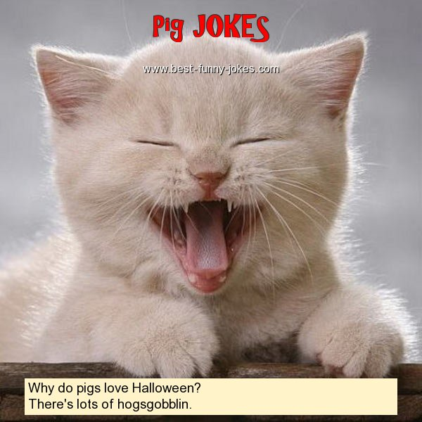 Why do pigs love Halloween?