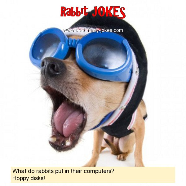 What do rabbits put in their