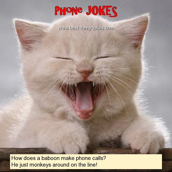 How does a baboon make phone c